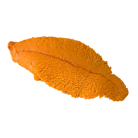 Erizo fresco gónadas (uni)