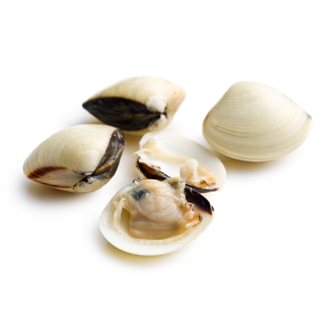 Almeja blanca Portuguesa
