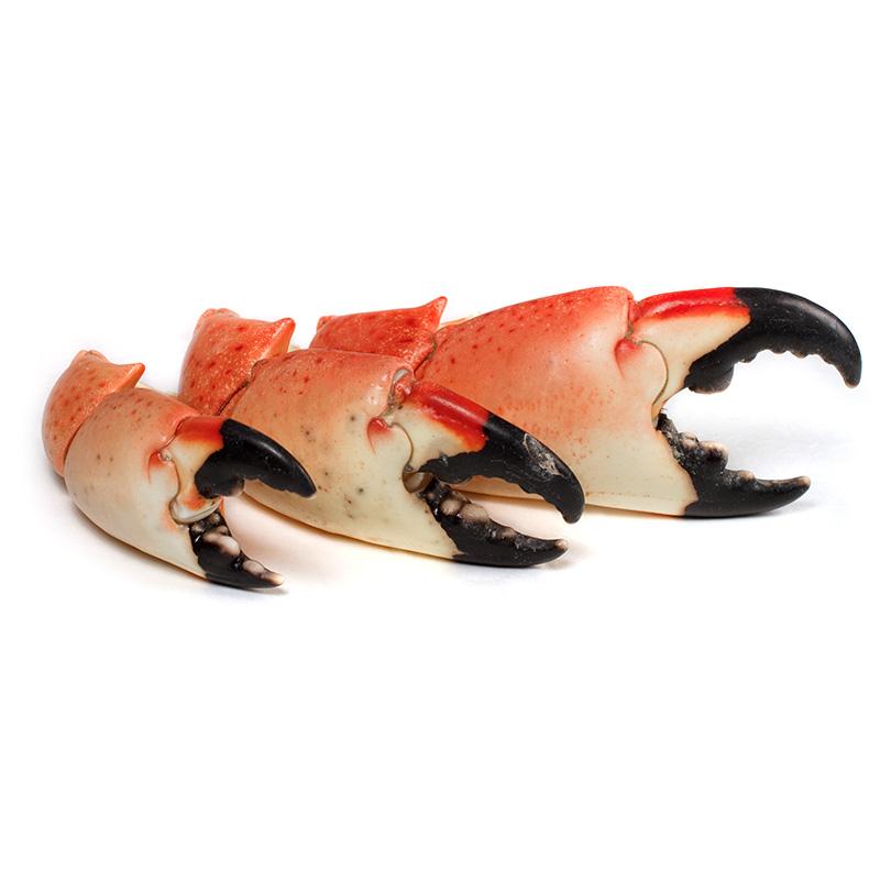 Ingredienta - Tenazas de stone crab de Campeche