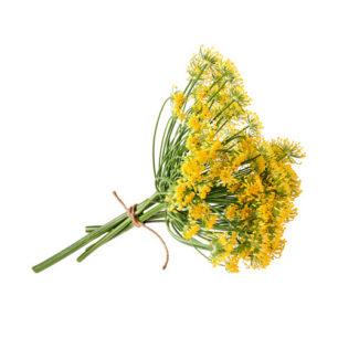 Flores de Hinojo frescas