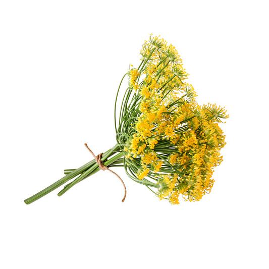 Flores de Hinojo Frescas, 1 manojo