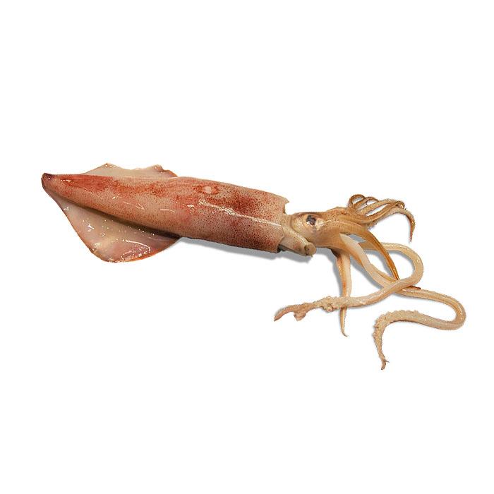 Calamar mediano congelado, 1kg