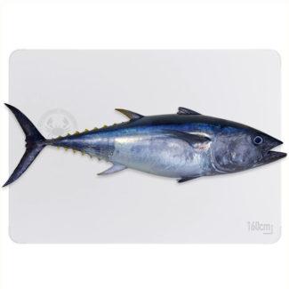 atun-bluefin-800-web