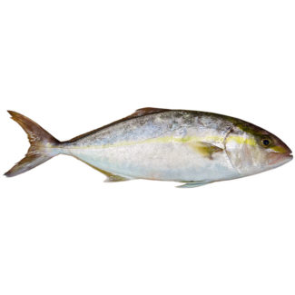 kanpachi-amberjack-entero