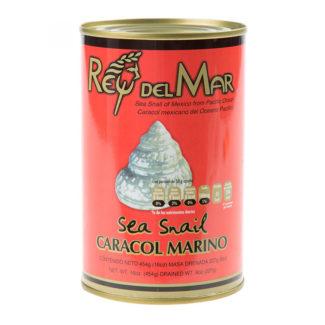 caracol-marino-ing