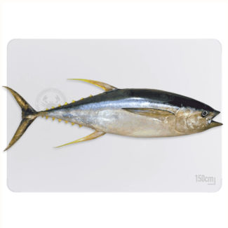 atun-yellowtail-800-web
