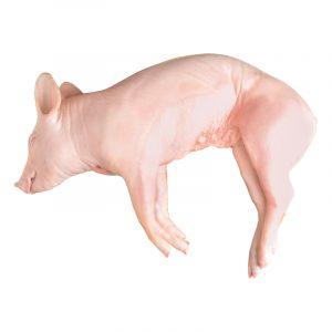 Cerdo Lechal Congelado, 7kg