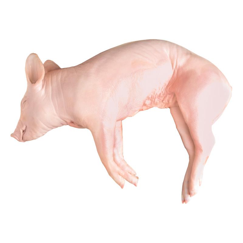 Cerdo Lechal Congelado